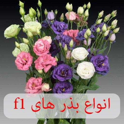 فروشگاه ظرافت انواع بذر گل های f1